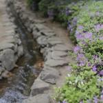 公園の中を流れる、 清らかな小川。