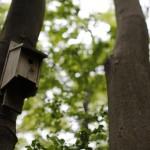 恋ケ窪樹林地にある鳥の巣箱。