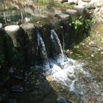 お鷹の道・真姿の池湧水群に流れる水は、環境省が選定する「名水百選」に選ばれています。