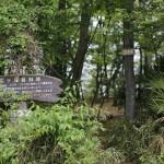 国分寺の緑の一つ、恋ヶ窪樹林地。