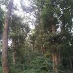 緑が生い茂る西恋ヶ窪緑地