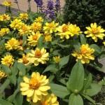 校内を彩る、鮮やかなお花
