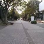 大学内の桜並木