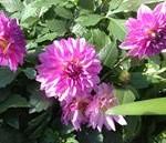 ふと見つけたピンクの花