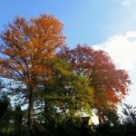 爽快な青空とひらひらと舞い落ちる葉