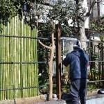 竹垣と素敵なお庭