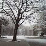大寒過ぎ、寒さ極まり雪化粧。