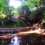 湧水の量は季節によって変化する池