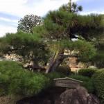 街を見守る国分寺記念樹