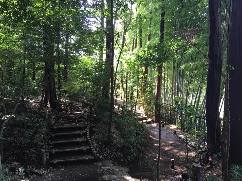 夏の自然を感じる樹林地