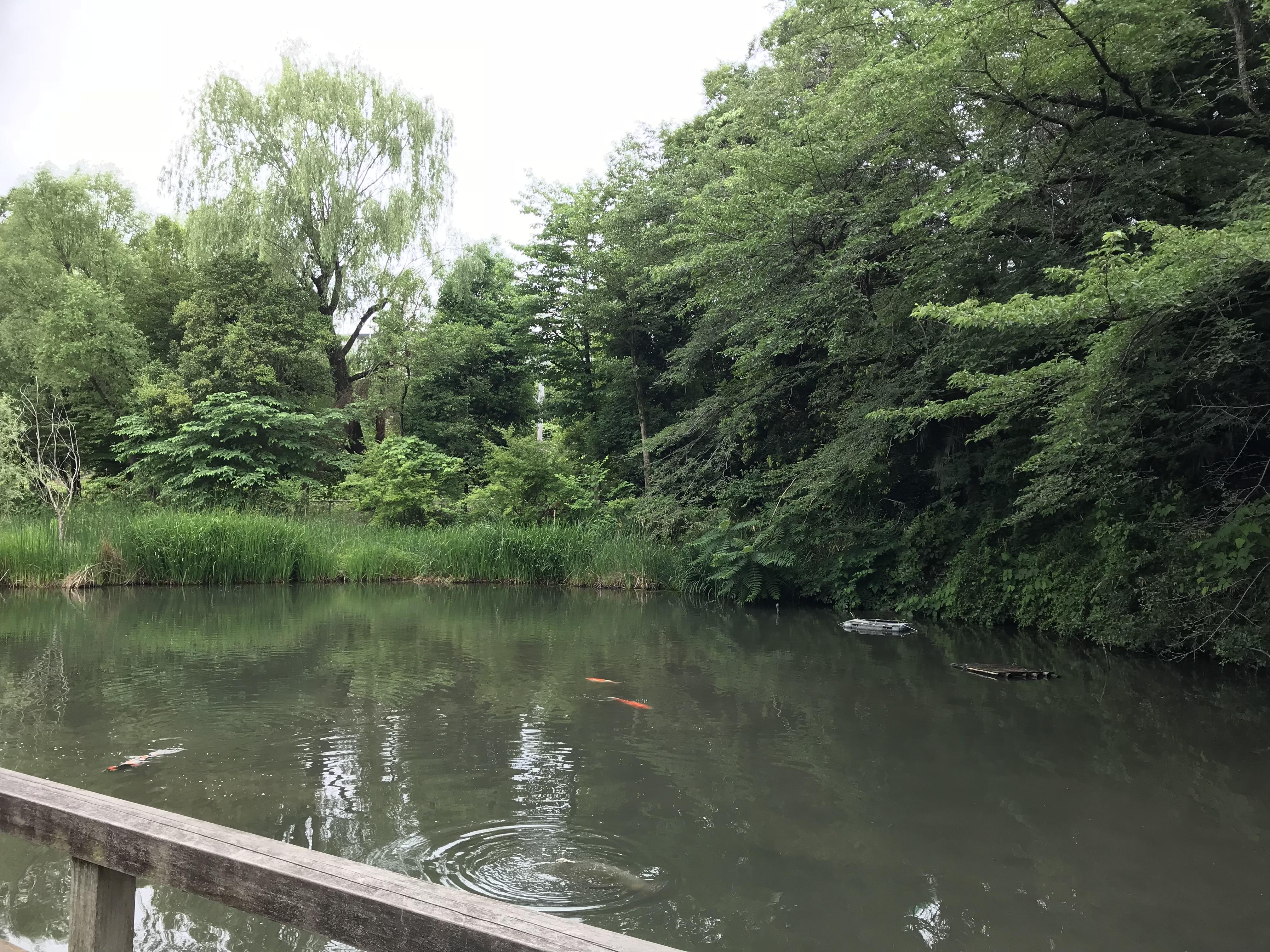 自然いっぱいの「姿見の池」